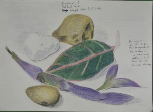 assignment 1 - Natural Forms - Composition Development - Colour Pencil