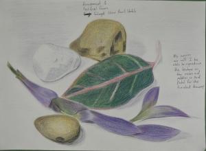 assignment 1 - Natural Forms - Composition Development - Colour Pencil