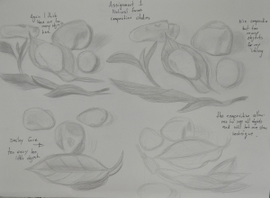 Assignment 1 - Natural Forms - Composition Studies