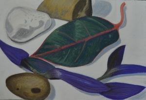 Assignment 1 - Natural Forms - Finished Drawing