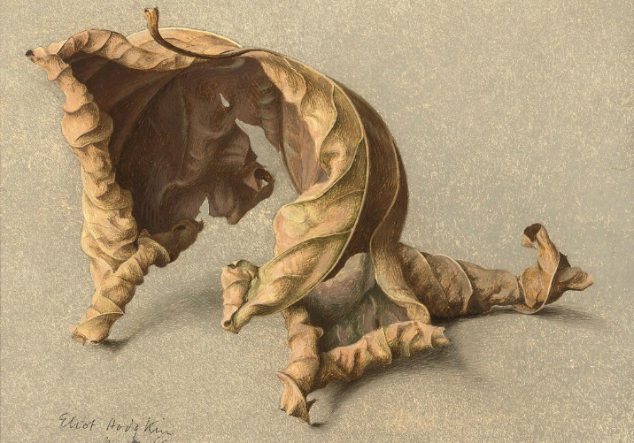 Eliot Horgkin Large Leaf 2 Tempera on Card