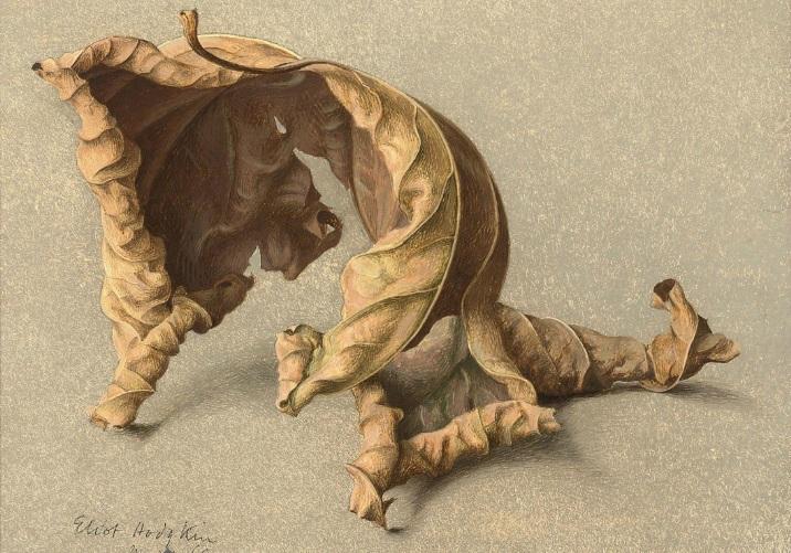 Eliot Horgkin Large Leaf 2 Tempera on Card