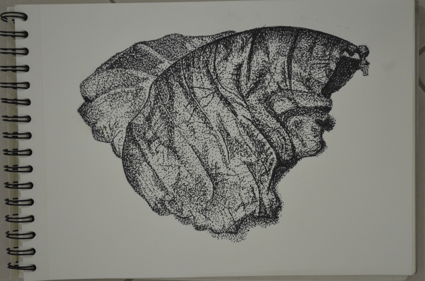 Drawing With Lines And Dots : Stipples and dots my drawing course