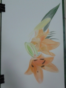 Drawing the Orchid