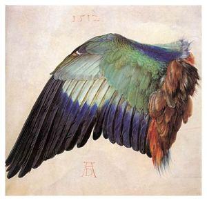Albrecht Dürer Wing of a Blue Roller 1512