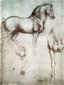 Cavillo di Leonardo - 1490 c