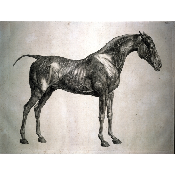George stubbs anatomy of the horse