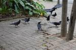 photo-ravens 2