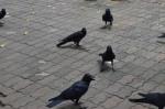 photo-ravens 4