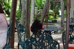 photo-ravens 8