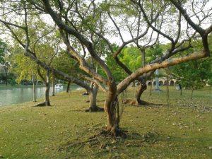 My chosen group of trees