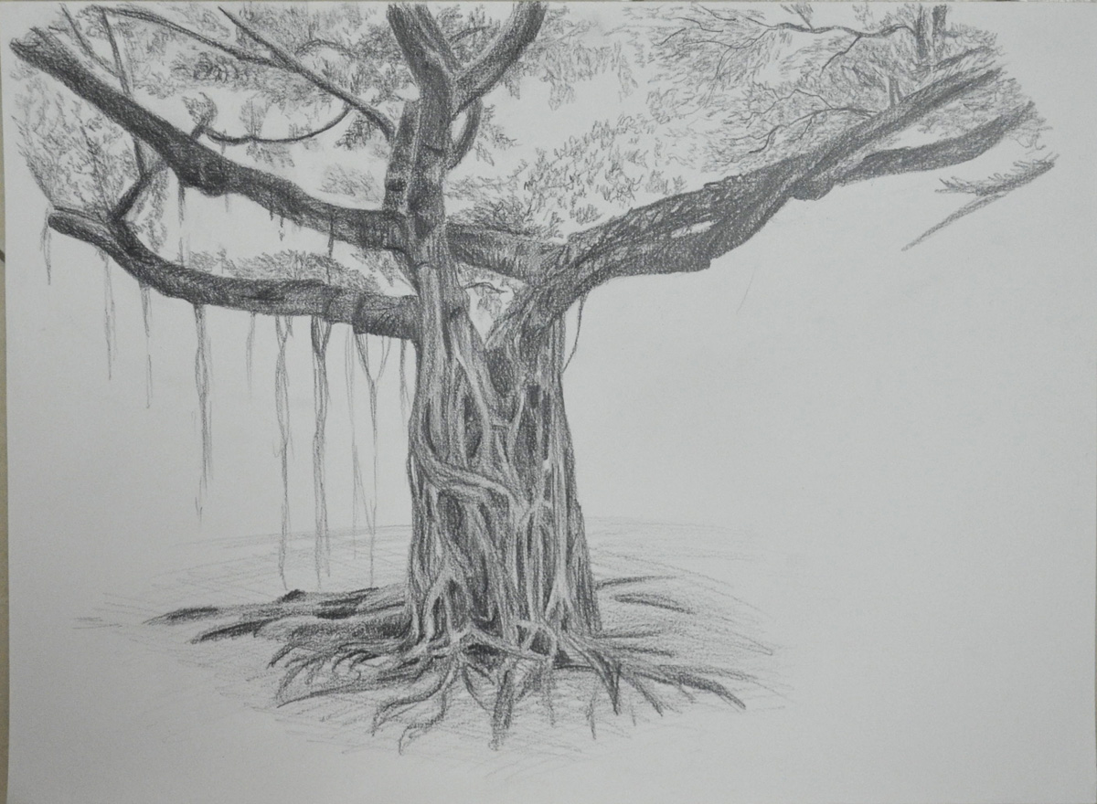 2 - Larger Study of an Individual Tree - My Drawing Course