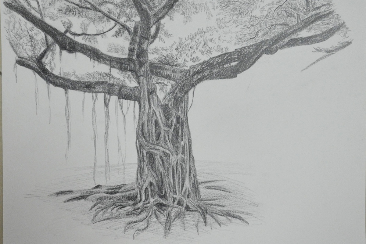 Larger Study of an Individual Tree