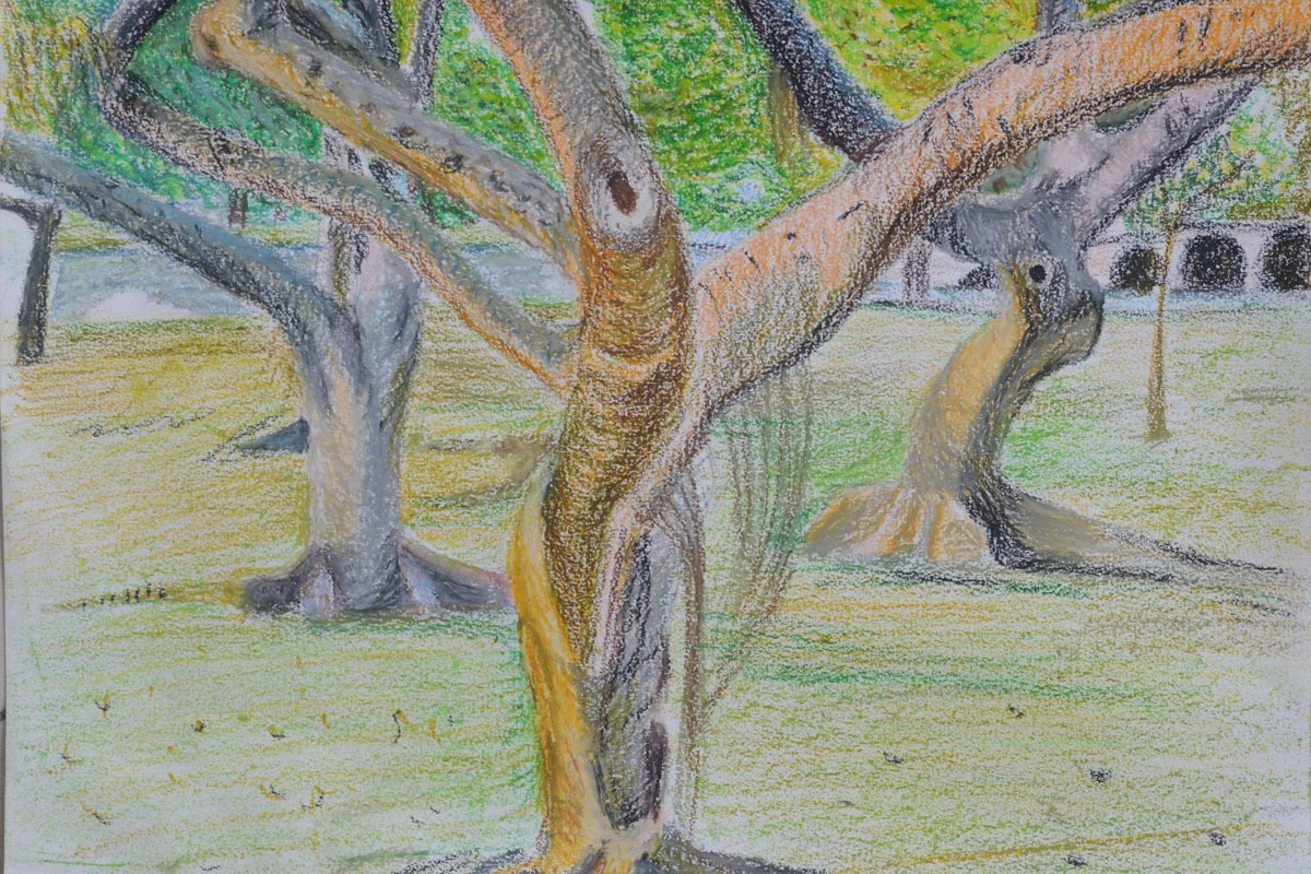 My finished Study of Several Trees