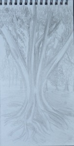 Sketching an Individual Tree 1st Drawing