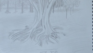 Sketching an Individual Tree 2nd Drawing routes