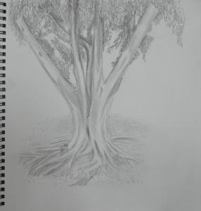 Sketching an Individual Tree 3rd Drawing