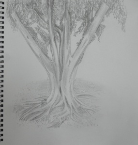 Sketching an Individual Tree 3rd Drawing