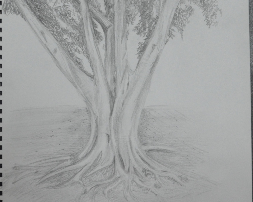 Sketching an Individual Tree 4th Drawing