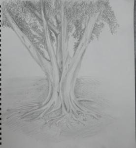 Sketching an Individual Tree 4th Drawing