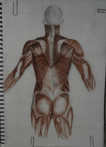 3 - Muscles, Conte Pencil on Tracing paper