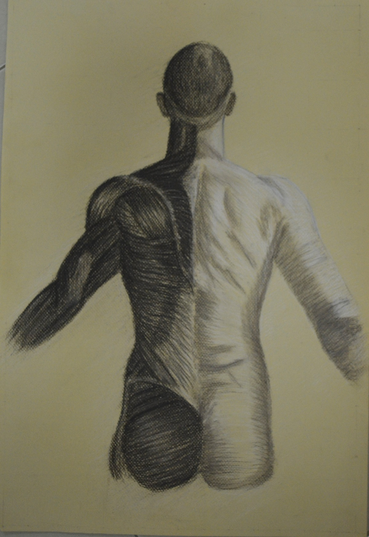4 - Finished Anatomical Drawing Half and Half
